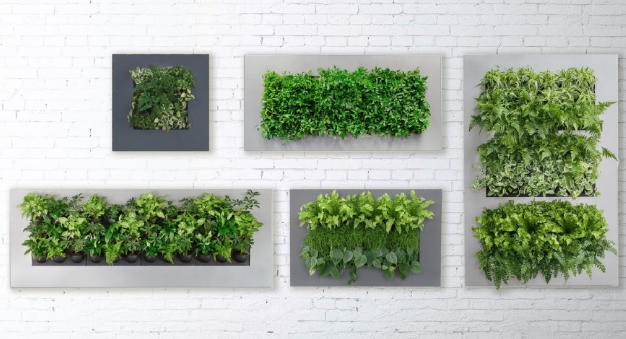 All The Different Types Of Green Walls We Offer Take Your Pic Plant Wall Green Wall Green Wall Design