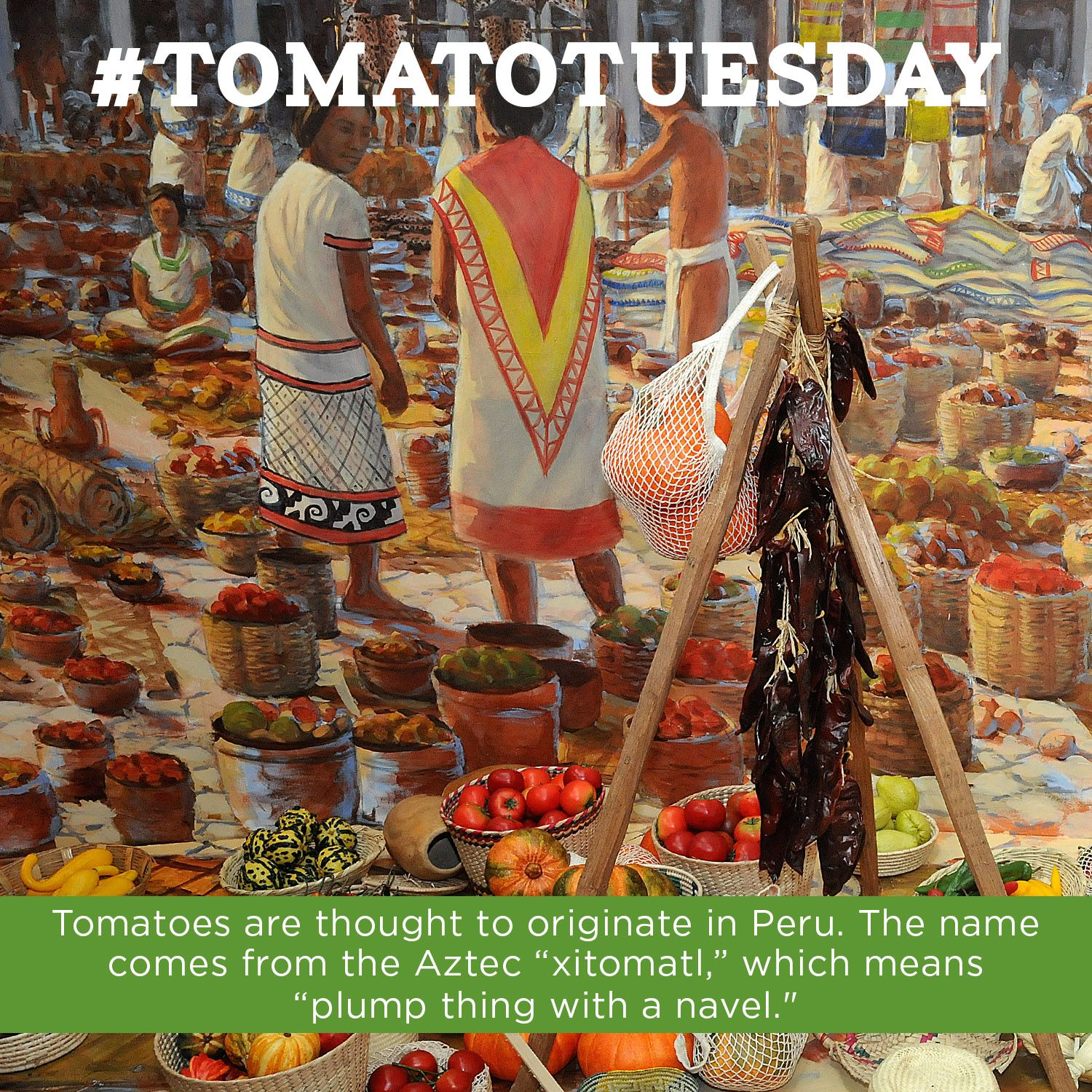 Tomatoes have come a long way… from Peru to Maine! #TomatoTuesday
