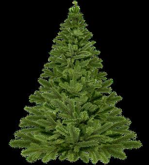 Gratis Billede Pa Pixabay Juletrae Christmas Juletrae Naletrae Flotte Juletraeer Trae Juletrae