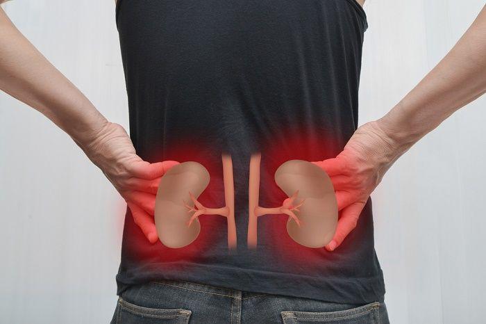 Por diferentes factores, como infecciones, cálculos renales o cualquier otra afección los riñones podrían llegar a producir dolor en la parte baja de la espalda. Este dolor suele ser agudo y abarca el área desde la última costilla hasta los glúteos, pudiendo incluso reflejarse en las caderas y la ingle.