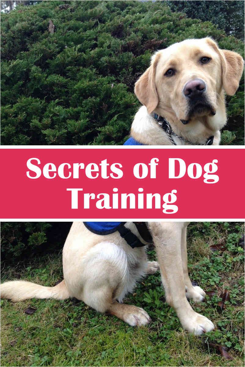 How To Train Your Dog Shock Collar And Pics Of Dog Door Training