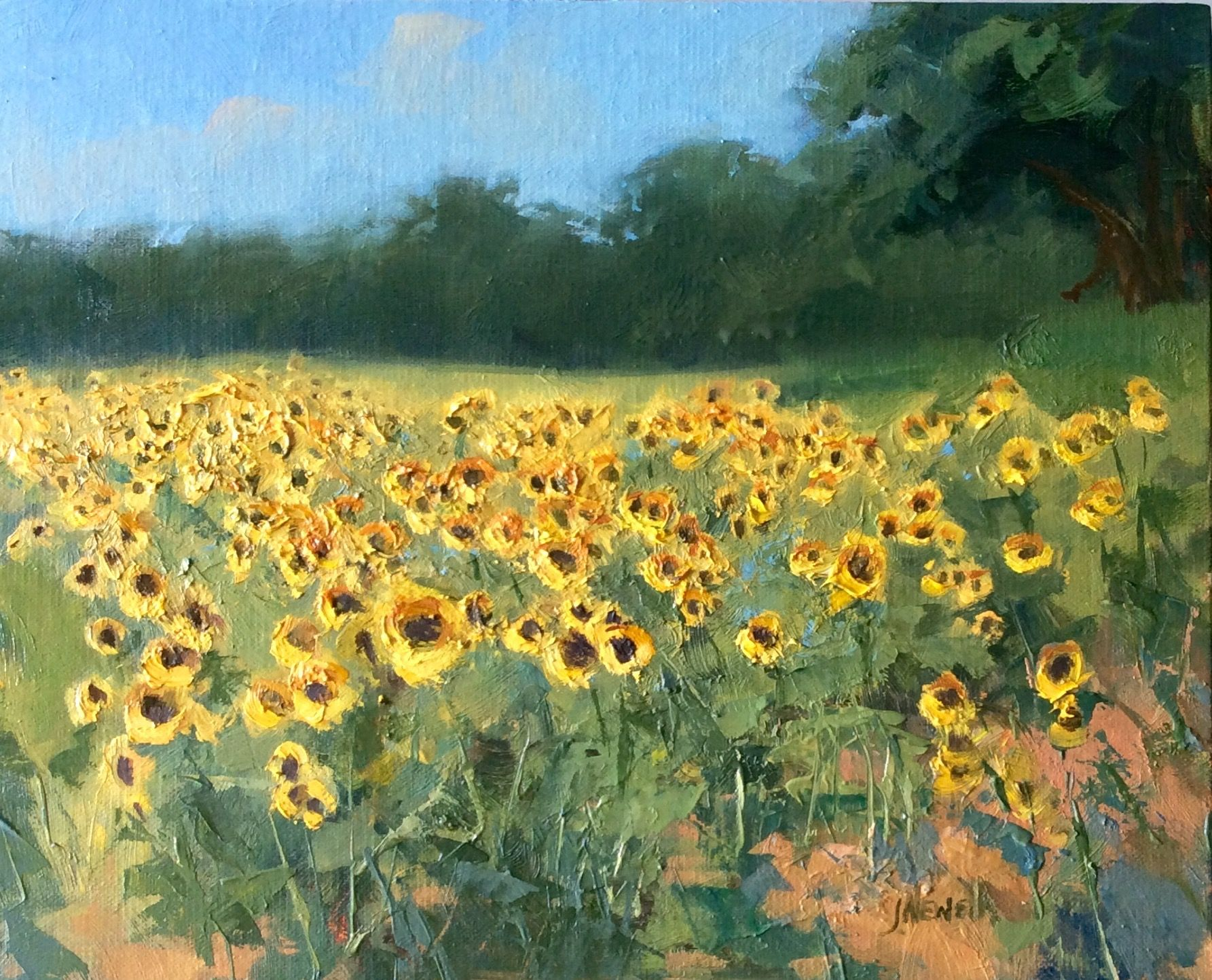 Sold Sunflower Field Oil Painting By Jacki Newell 8x10 525 Www