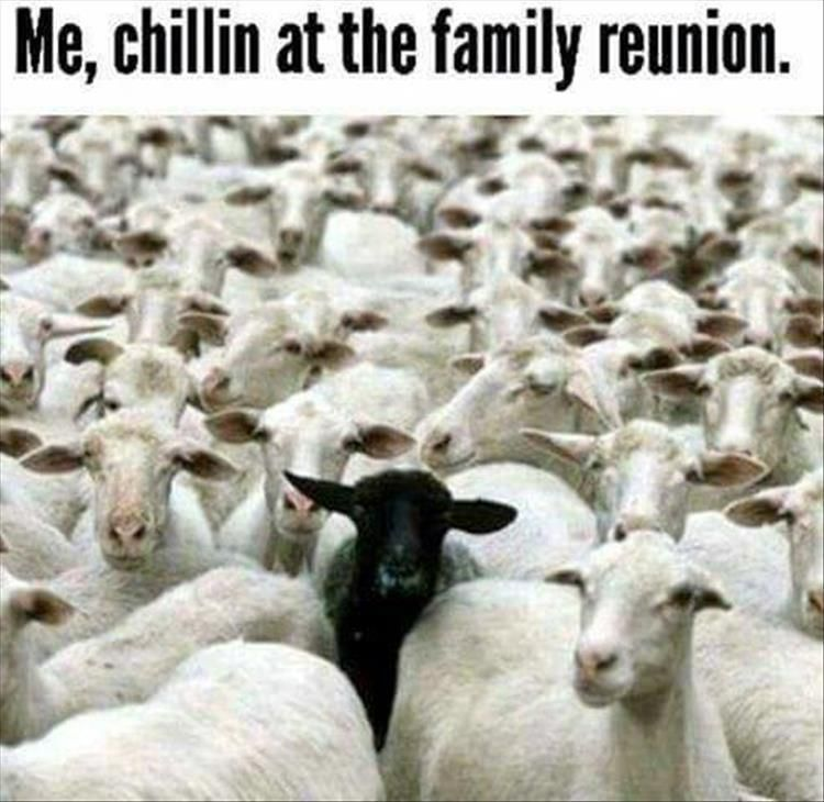Funny Pictures Of The Day 35 Pics Black Sheep Quotes Black Sheep Of The Family Sheep Quote