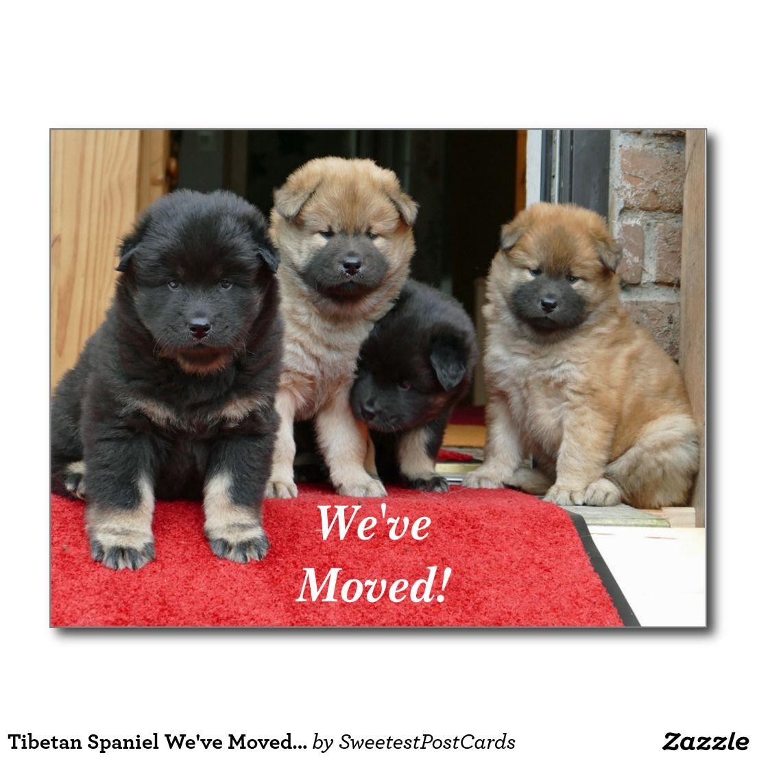 Tibetan Spaniel We've Moved New Address Postcard Zazzle