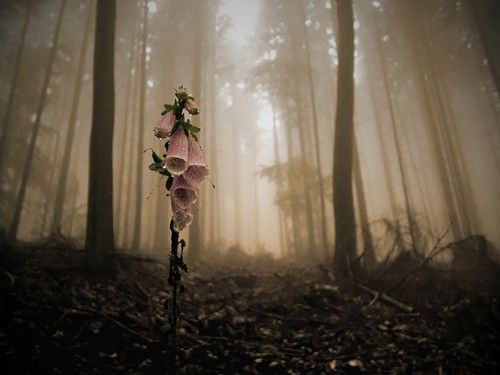 Image result for flower in a dark forest