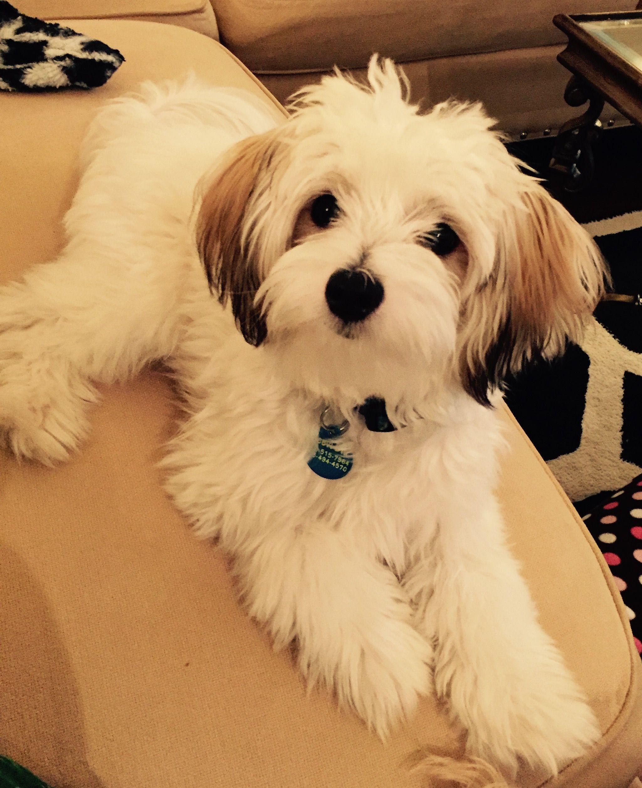 Papitese 8 Month Old Levi Blu 8 Month Olds Blu Levi