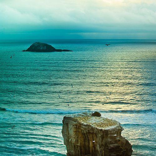 Seaside Beach Landscape, Muriwai, Auckland, NZ ~ Photo by â–ºCubaGallery