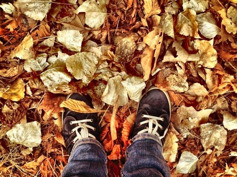 Debería ser posible poder morir así en belleza,  como las hojas en otoño.  #Autumn #france #beauty