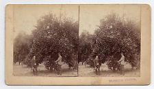 Orange City Florida Stereoview By MM & WH Gardner of Atlanta Georgia #6