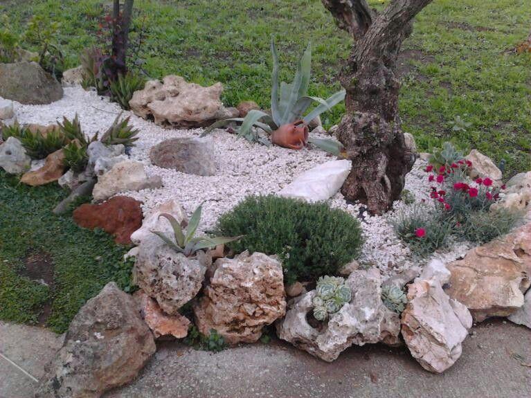Giardino idee aiuola rocciosa fiorita piante grasse for Piante da aiuola