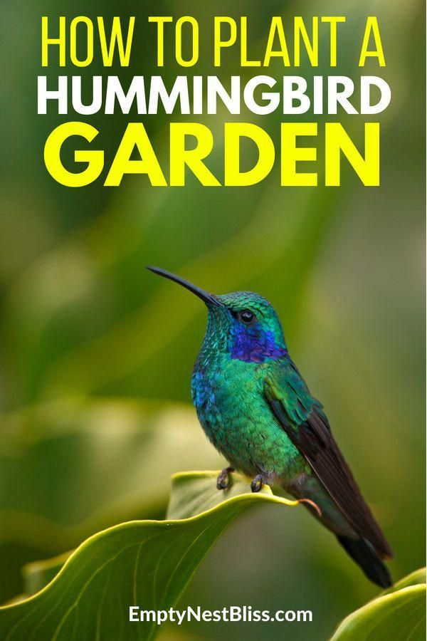 Plants and perennials that attract hummingbirds and ...