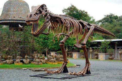 Sculpture T Rex Fossil picture