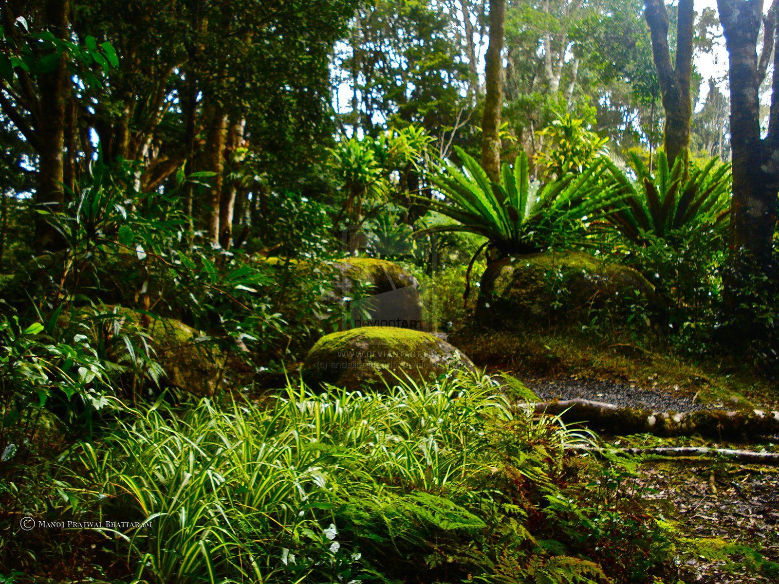 Rainforest Forest Floor Plants
