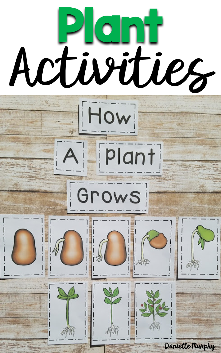 Plant Non Fiction unit for Kindergarten, First, Second Grade!  Posters, Anchor Charts, Life Cycle activities, crafts, printables, and more!  Perfect for Spring!