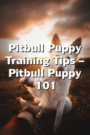 Kylie Ogden Tells About Pitbull Puppy Training Tips Pitbull