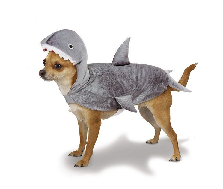 Casual Canine Shark Dog Costume X Small Chewy Com Costumes In