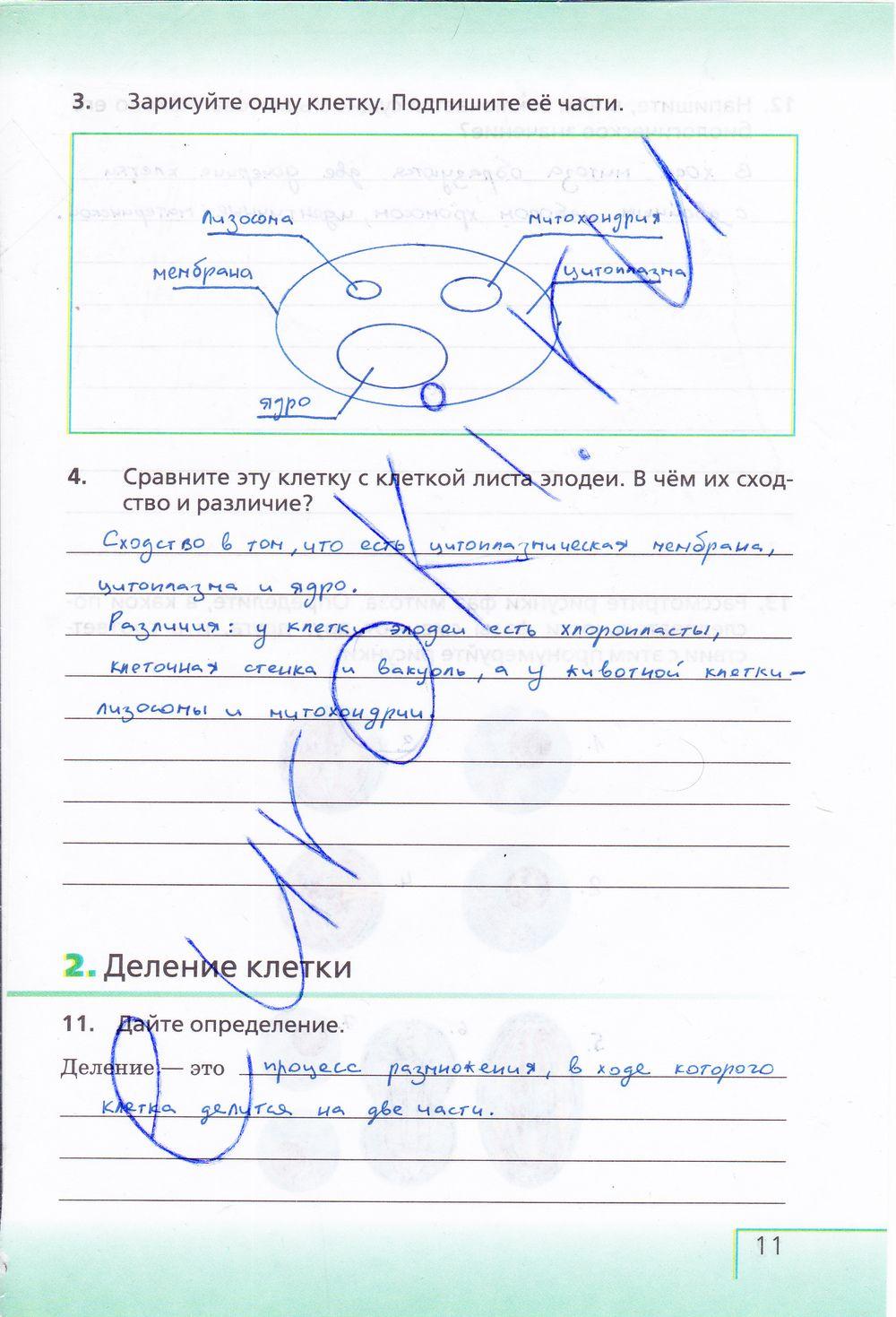 Спиши.ру 4 класс окружающий мир рабочая тетрадь
