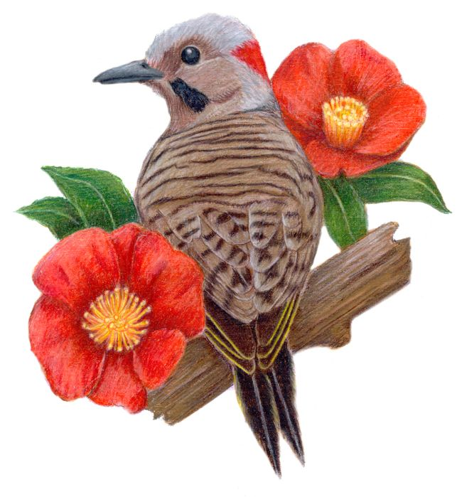 Yellowhammer Al State Bird State Birds Bird Birds Painting