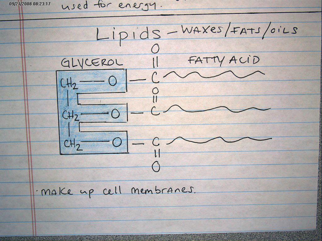 Macromolecules Graphic Organizer