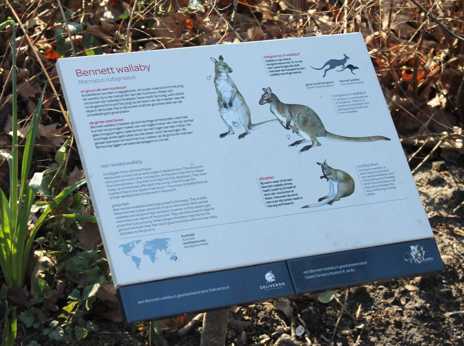 Sign Red-necked wallaby | ZooChat | Australia | Red, Signs, Australia