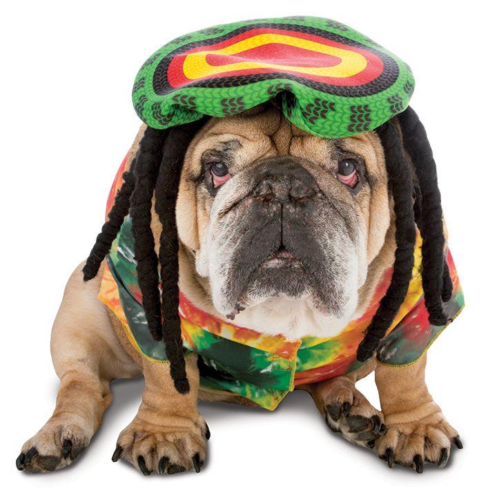 Dog In Zelda Rasta Costume Halloween Party Event Costumes