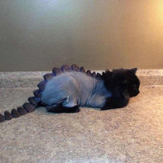 Dino Cat Plots Your Extinction is listed (or ranked) 2 on the list Cats Who Are Not Happy with Their New Hair Styles