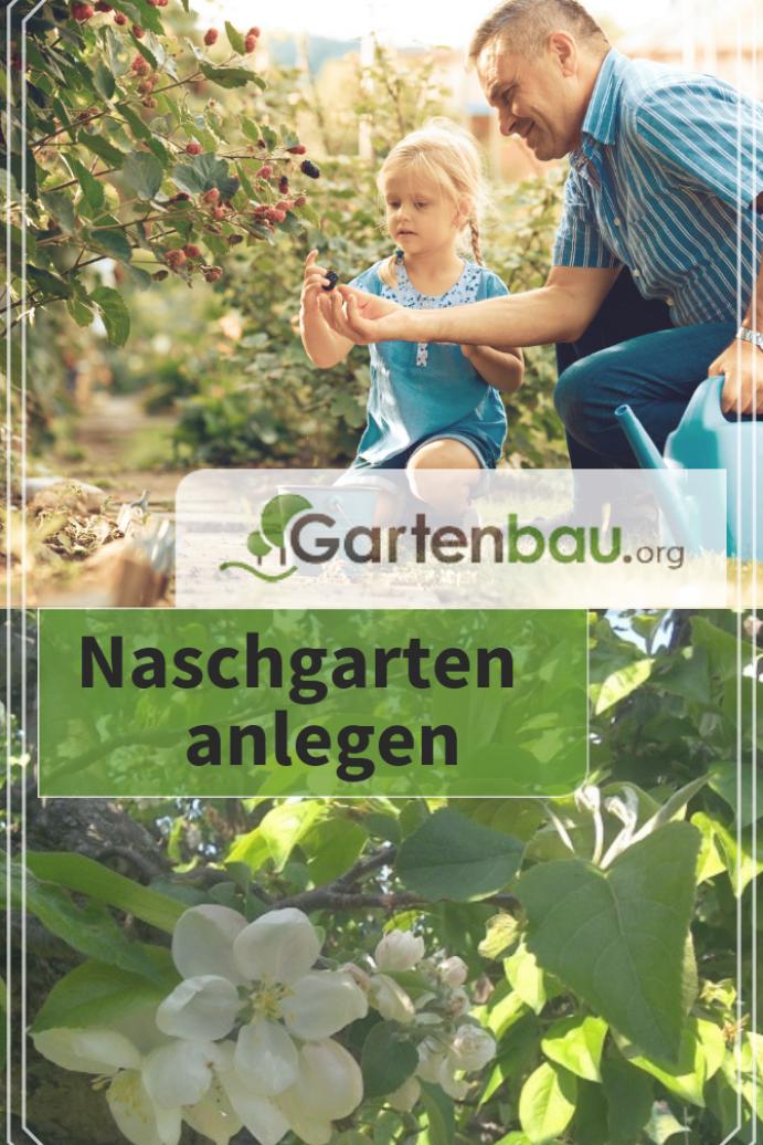 Essbare Bodendecker Die Top 10 Fur Ihren Garten Bodendecker Die Essbare Fur Garten Ihren Top Top10 Edible Plants Edible Flowers Edible Garden