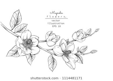 Sketch Floral Botany Collection Magnolia Flower Drawings Black And White With Line Art On White Backg Flower Drawing Black And White Sketches Magnolia Tattoo