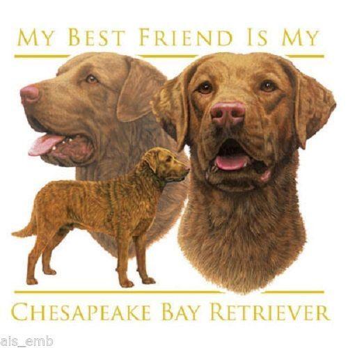 Chesapeake Bay Retriever Dog Heat Press Transfer For T Shirt Sweatshirt 826 Dog In Heat Chesapeake Bay Retriever Retriever Dog