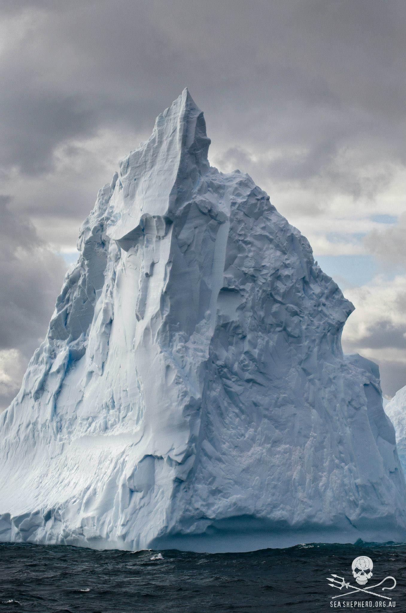 Antarctic Icebergs Towering High Seashepherd Antarctica Iceberg Photography Landscape Life Ocean Antarctica Antarctica Travel Antarctica Cruise