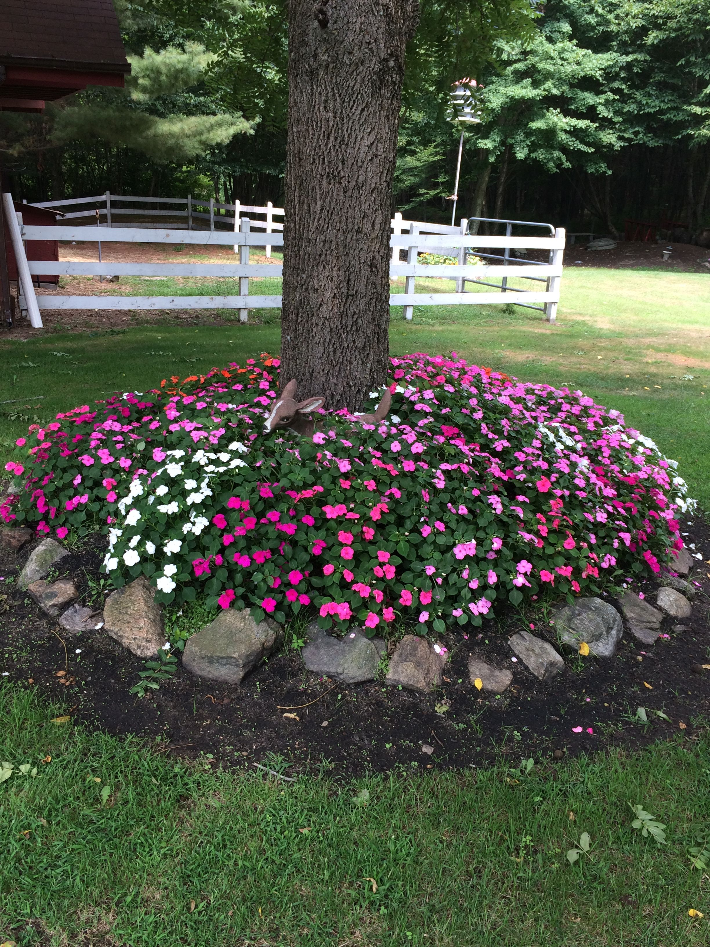 Impatiens with one application of WOW soil and plant