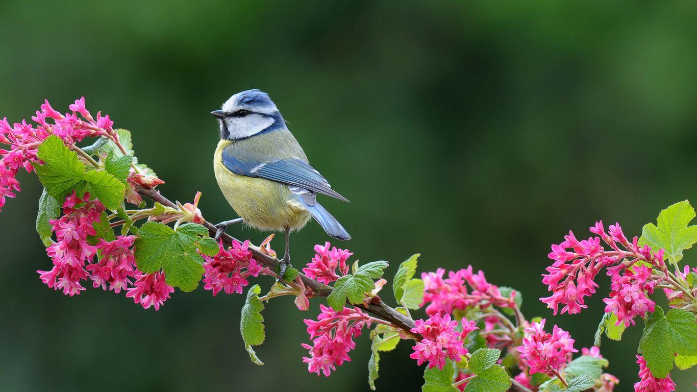 Картинки с птичками фото
