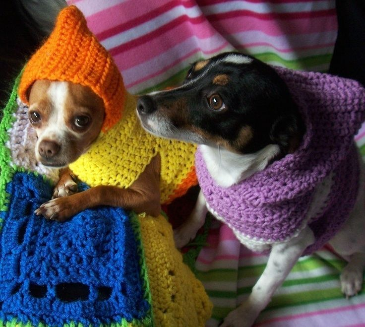 crocheted hooded dog sweater pattern pdf small and medium sizes via