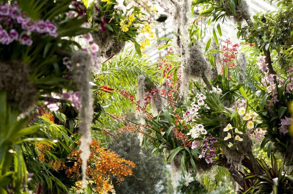 Morning Eye Candy This Is New York Botanischer Garten Pflanzen Orchideenpflanzen