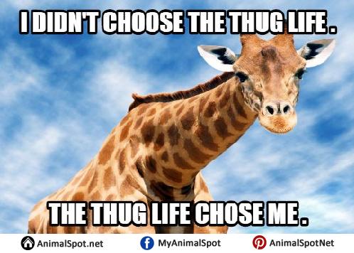 736f4ee19f4fc3f8f56e7208c3e040f3 giraffe meme different types of funny animal memes pinterest,Giraffe Meme