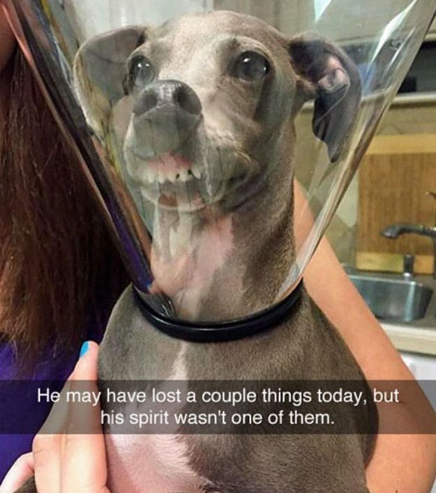 This dog who is looking on the bright side. | 21 Heartwarming Dogs That Are Guaranteed To Make Your Day Better