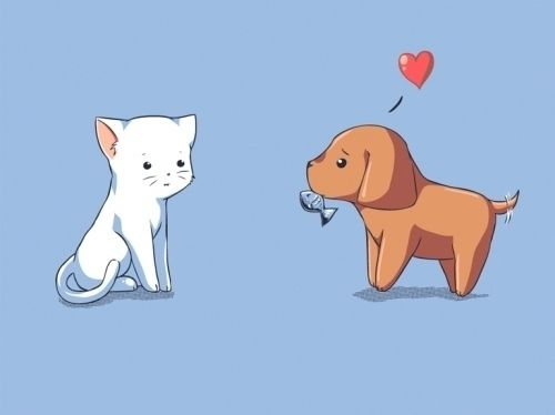 Adorable Cat And Dog Couple With Images Funny Dog Pictures