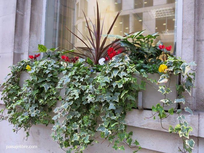Paisaje libre composiciones de plantas para jardineras en for Planta perenne en maceta de invierno