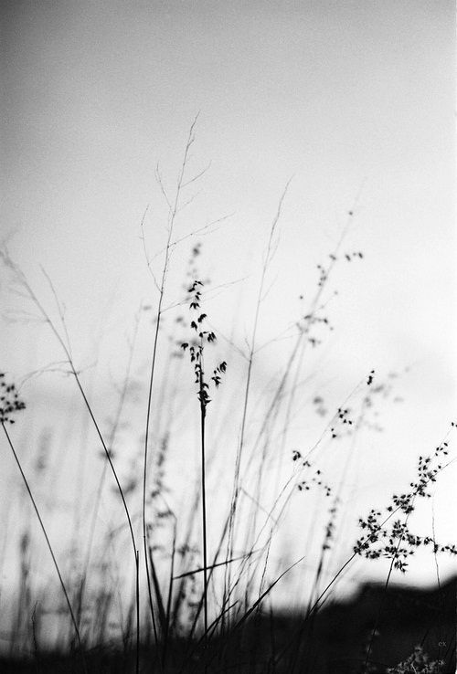 I Really Like The Sparse Grass In Black And White Because You Can See The Shape Of Them Without Being Distr Nature Photography Nature Black And White Aesthetic