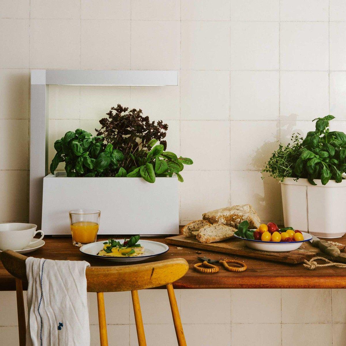 Tregren Herbie Indoor Garden Indoor Garten Kleine Garten Garten
