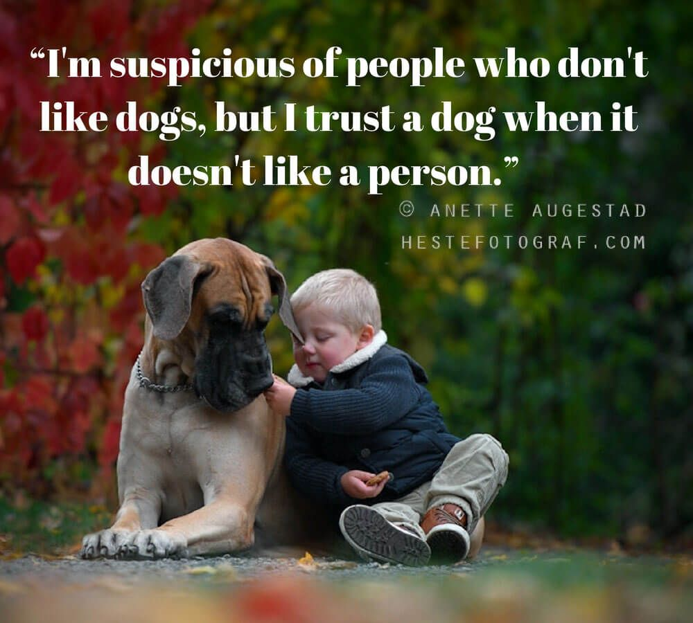 30 Quotes By Famous People That All Dog Lovers Can Relate To Part 2