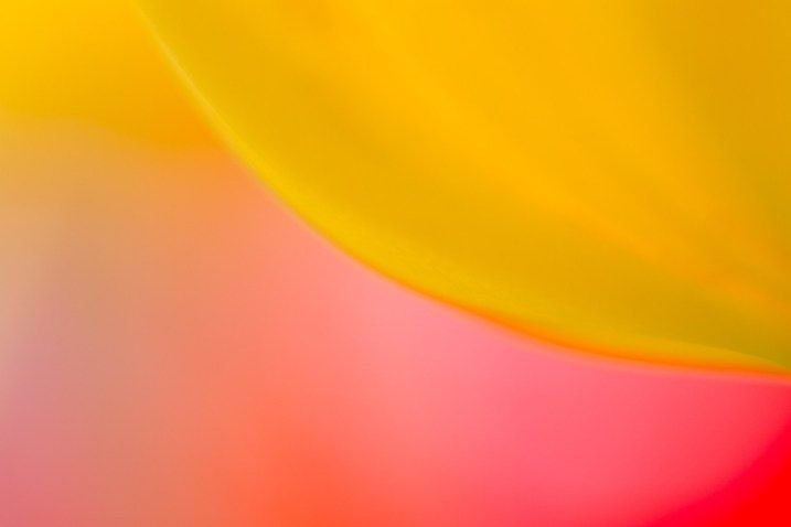 Abstract Photography For Beginners 9 Tips For Capturing: A Beginner's Guide To Abstract Flower Photography