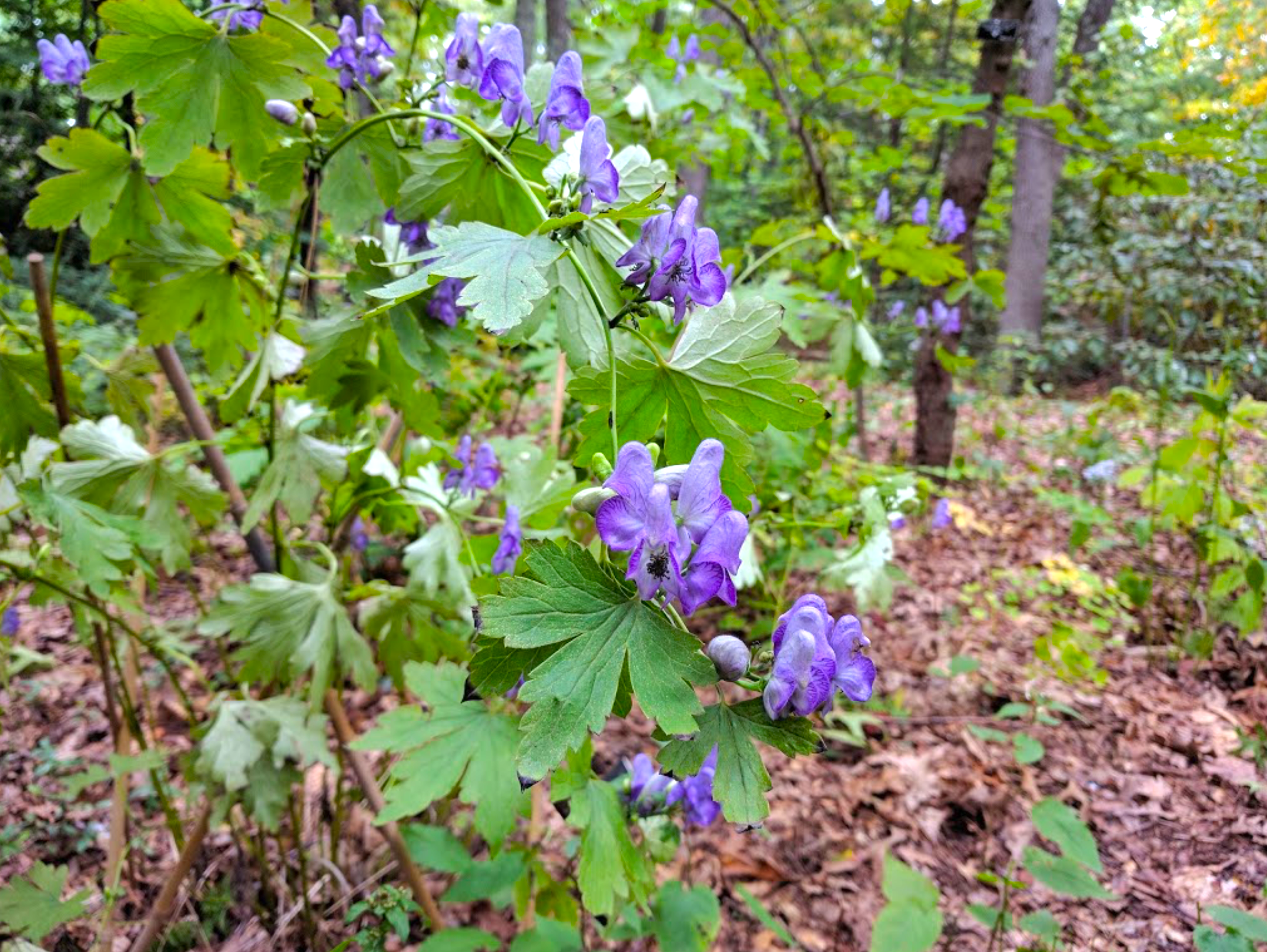 Garden In The Woods Is A Beautiful Hike In Framingham Massachusetts In 2020 Garden In The Woods Beautiful Hikes Wooded Landscaping