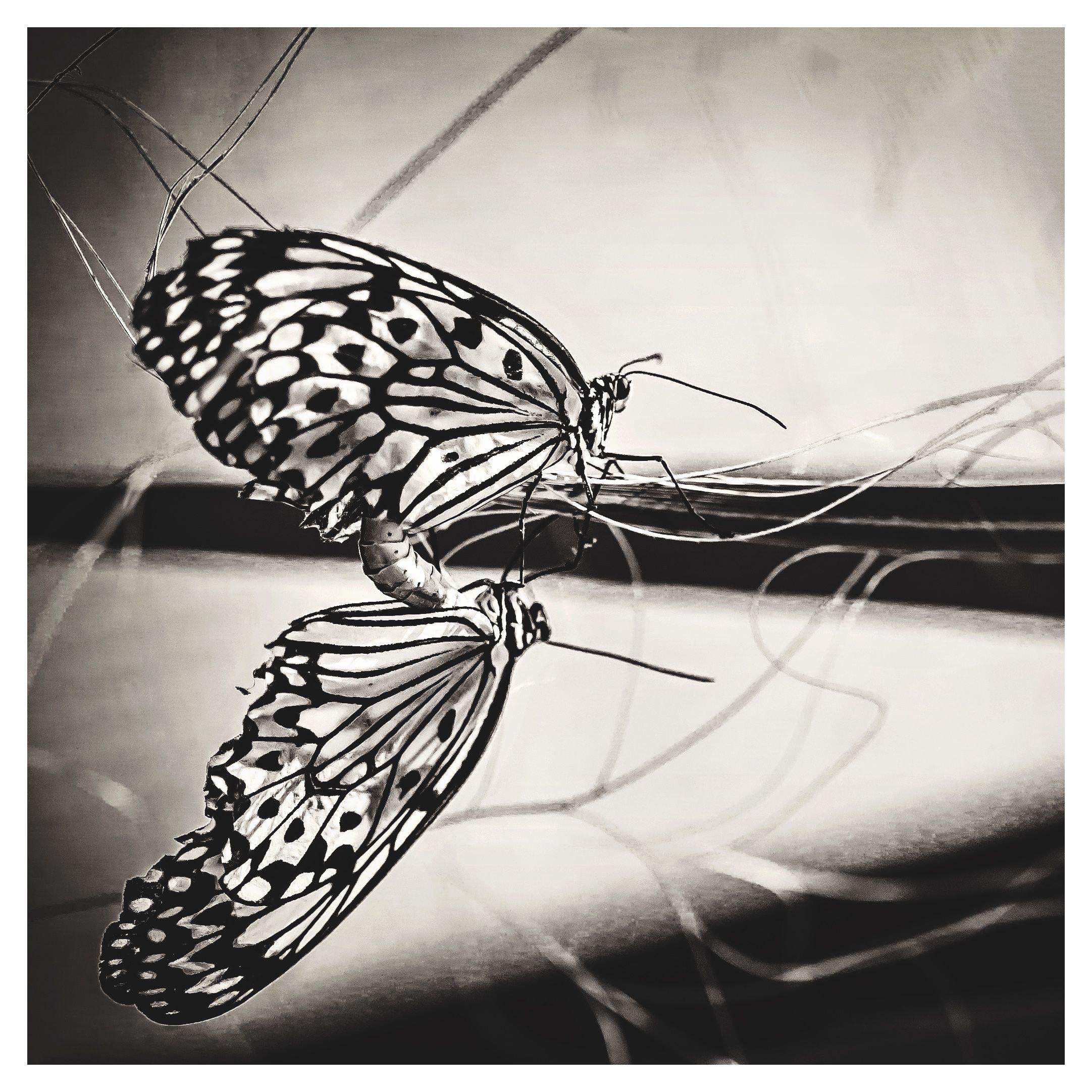 Butterflies b&w photography