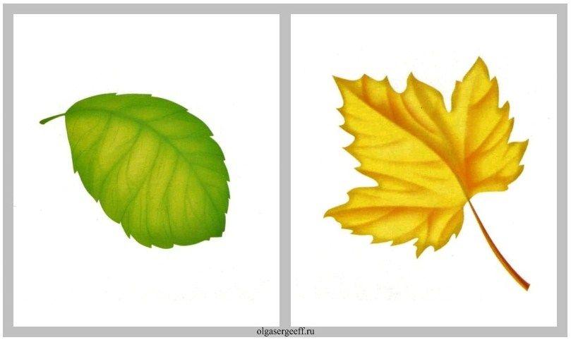 33.jpg 809×482 pixels