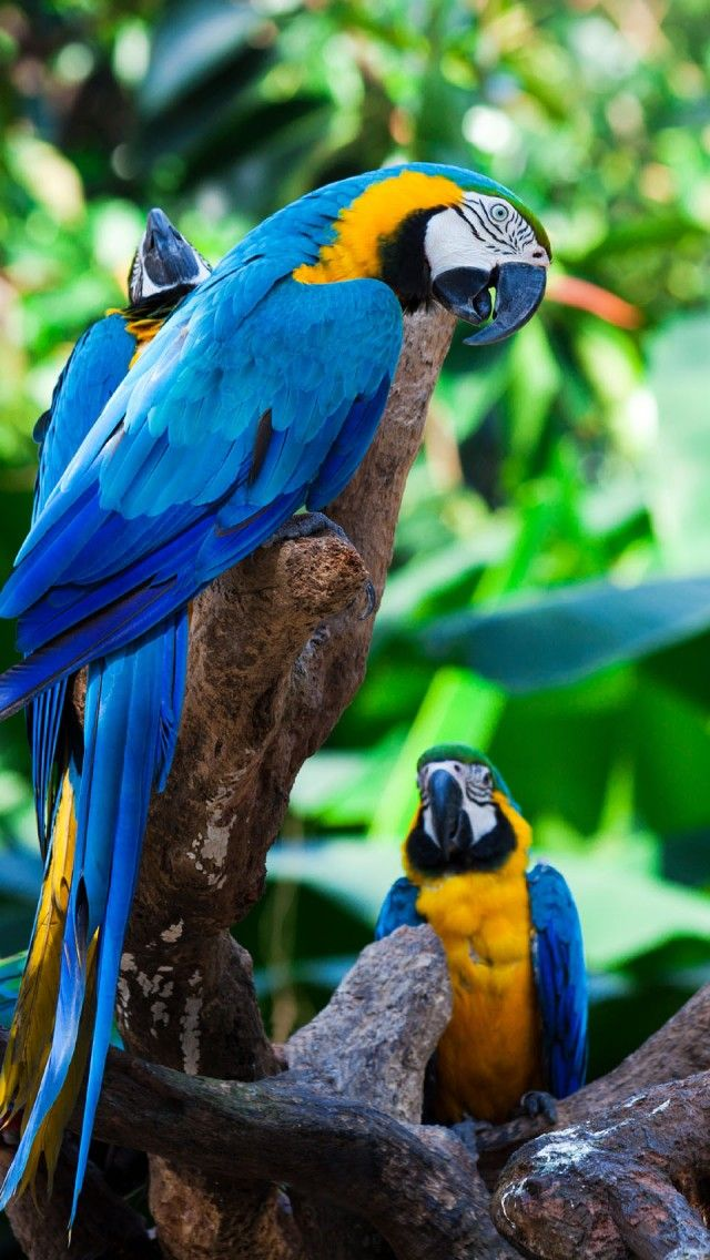 Tropical parrot group iphone 5 wallpapers backgrounds for Gold bird wallpaper