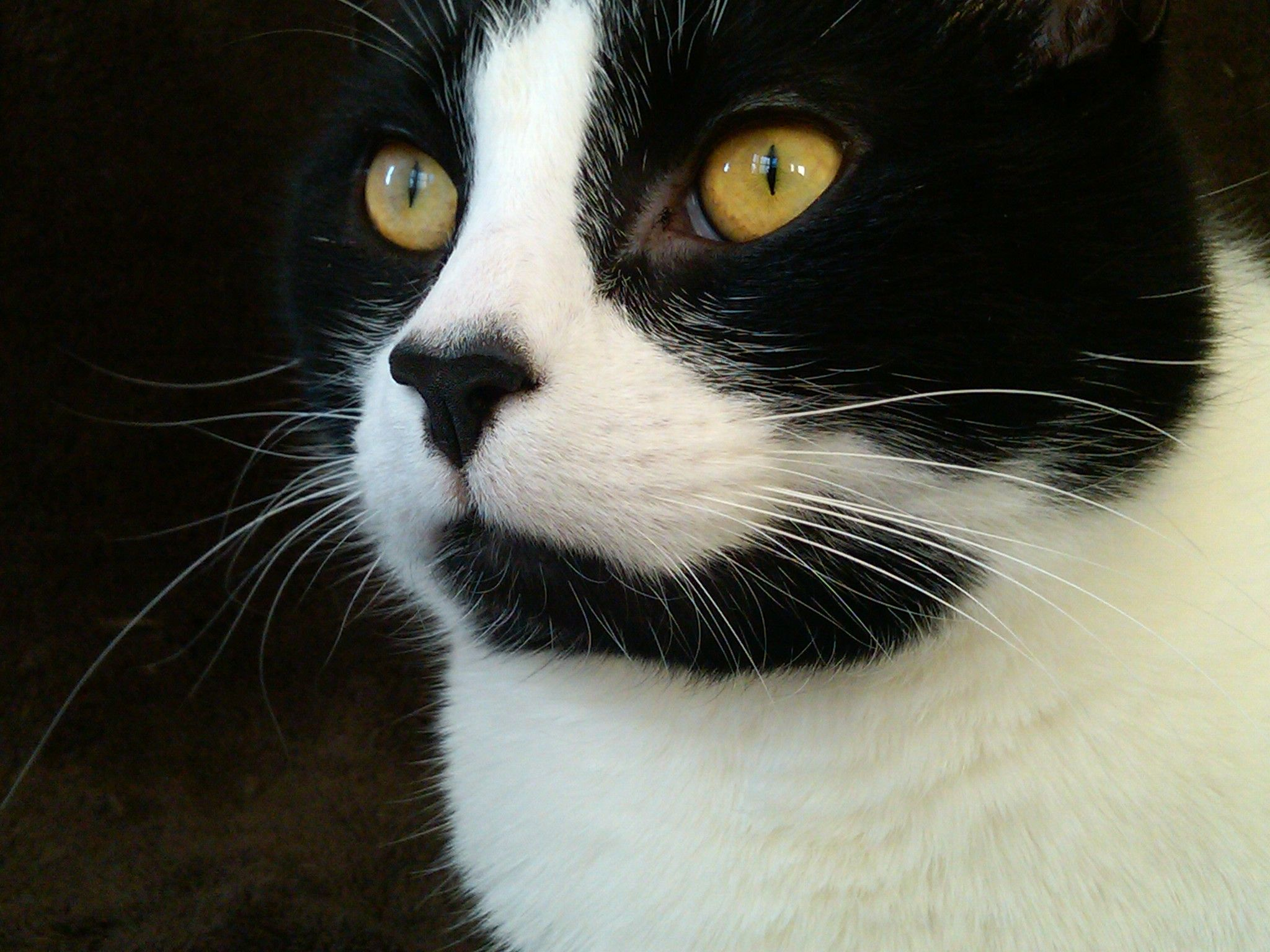 Cat Model!