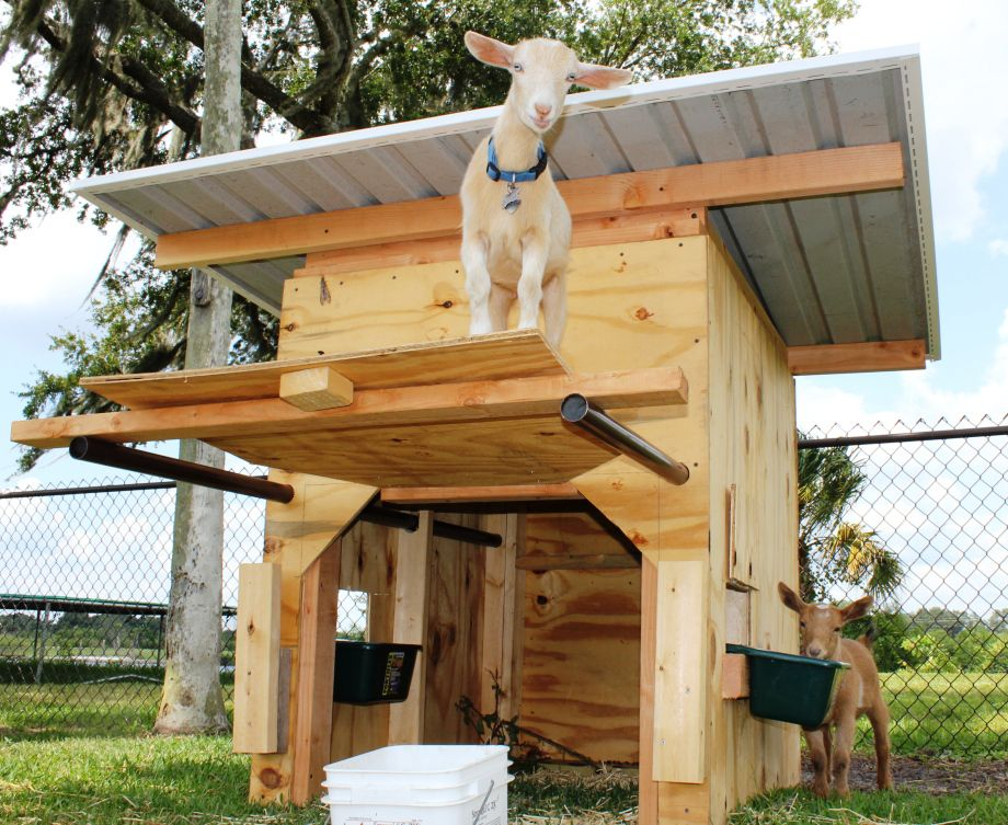 Free Goat House Plans | Pygmy Goat Shed Plans shed barn plans ...