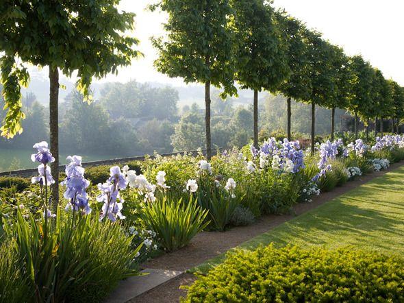 Fennel & Fern | Garden Europe | Gardening | Pinterest | Ferns garden ...