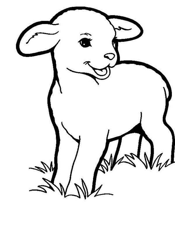 Baby Lamb Eating Grass Coloring Page Coloring Sky Animal Coloring Pages Lion And Lamb Lamb Drawing